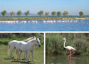 RESORT : Port Camargue